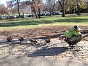 Boston public garden ducklings